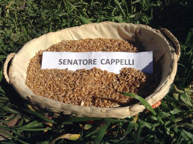 foto senatore cappelli